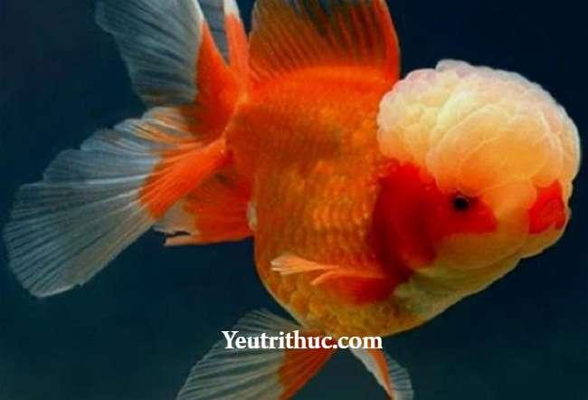 Hội chứng Não cá vàng là gì 9
