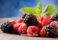 Raspberry là quả gì –có phải là quả Phúc Bồn Tử, Mâm xôi, Dâu Tằm 5
