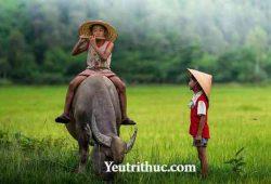 Trẻ Trâu là gì – Nghĩa của từ Sửu Nhi trên Facebook là gì 2
