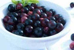 Acai Berry là quả gì, hình ảnh và công dụng quả Acai Berry