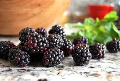 BlackBerry là quả gì mà người ta gọi là Dâu đen 1
