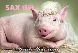 SAX là gì, ý nghĩa của từ SAX là gì đầy đủ và dễ hiểu nhất 1