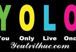 Yolo là gì viết tắt của từ nào, ý nghĩa của từ Yolo đầy đủ nhất