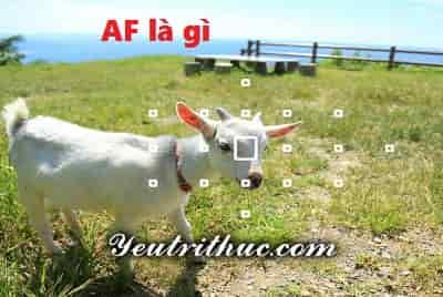 AF là gì viết tắt của từ nào, ý nghĩa AF đầy đủ