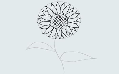 Cách vẽ Hoa Hướng Dương tỏa nắng 10
