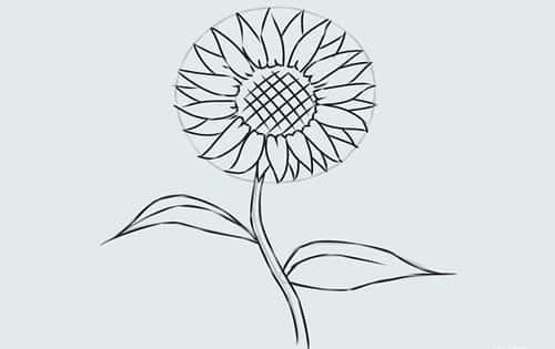 Cách vẽ Hoa Hướng Dương tỏa nắng 11
