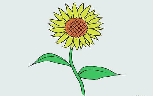 Cách vẽ Hoa Hướng Dương tỏa nắng 12