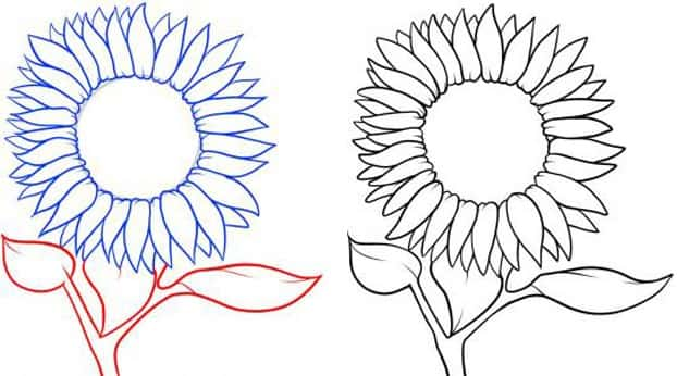 Cách vẽ Hoa Hướng Dương tỏa nắng 3