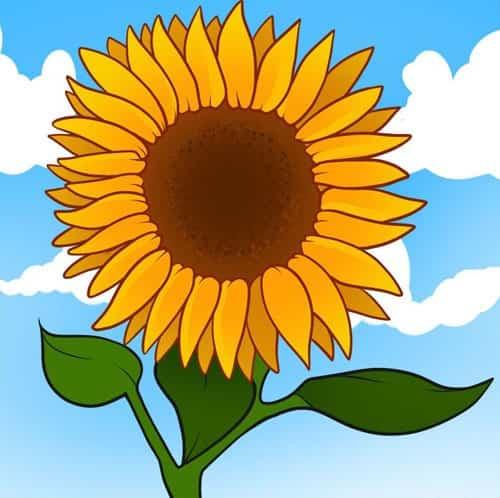 Cách vẽ Hoa Hướng Dương tỏa nắng 4