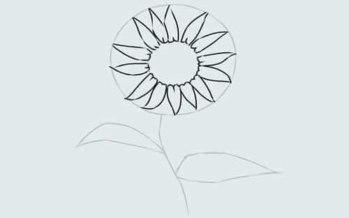 Cách vẽ Hoa Hướng Dương tỏa nắng 8