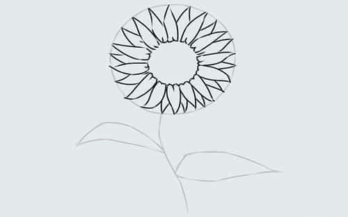 Cách vẽ Hoa Hướng Dương tỏa nắng 9